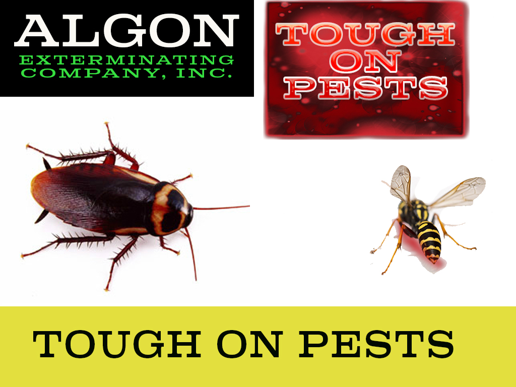 Algon Tough On Pests